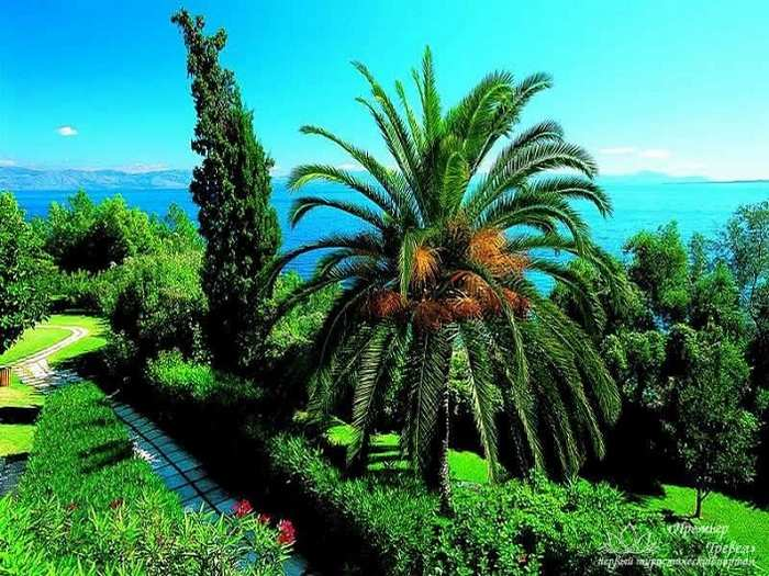 Отдых на острове Корфу - кругом обилие зелени
