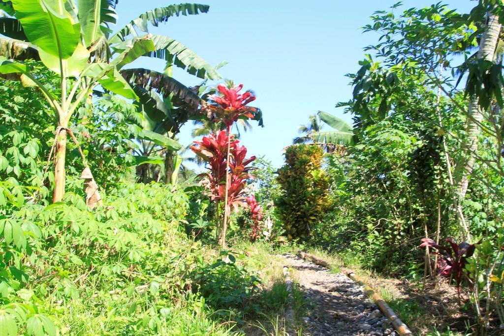 Отдых на острове Фиджи - Остров «Ванау Леву»