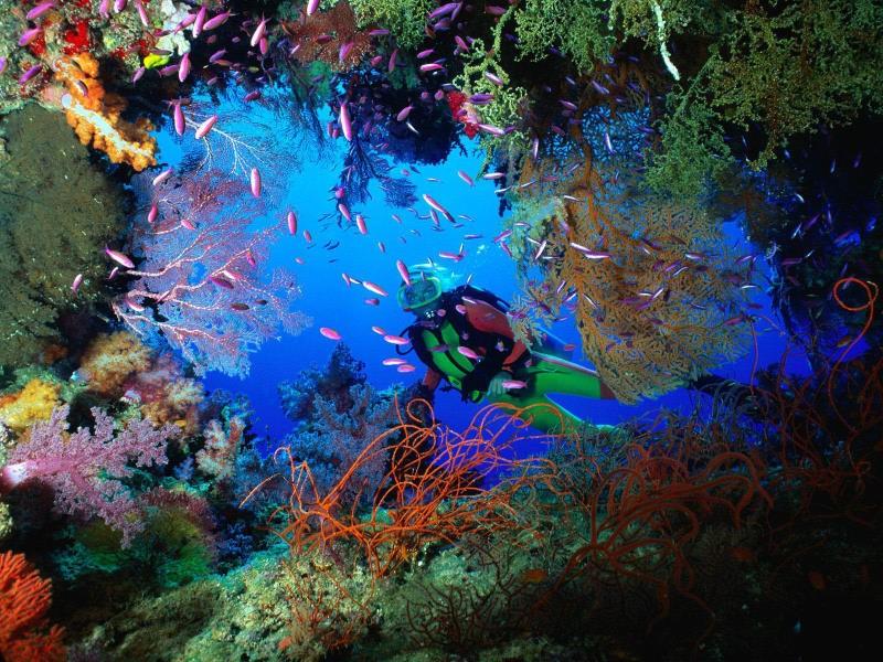 Отдых на острове Фиджи - Подводный мир Фиджи