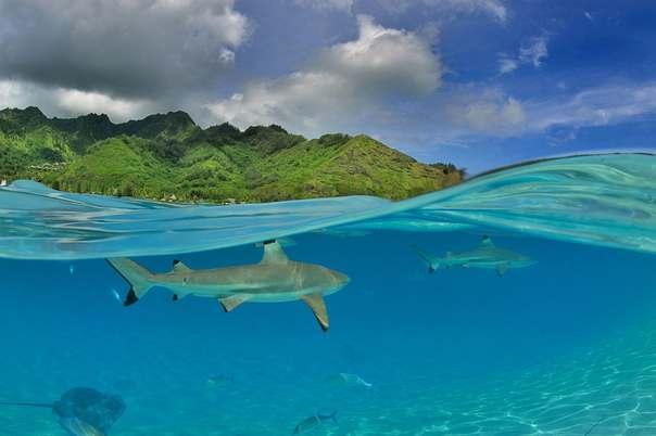 Острова Французской Полинезии - Остров Муреа