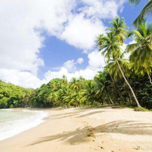 Отдых в Гренаде, цены - Сент-Джорджес - Заповедник Ла-Сагесс