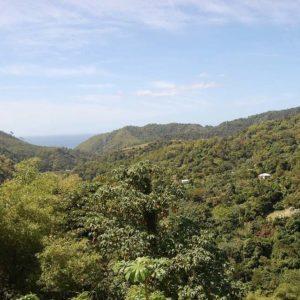 Отдых в Гренаде, цены - заповедник Гренада-Доув