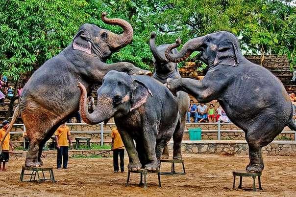 Отдых на острове Шри-Ланка - местный зоопарк