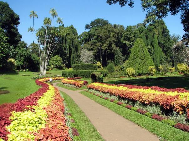 Отдых на острове Шри-Ланка - ботанический сад