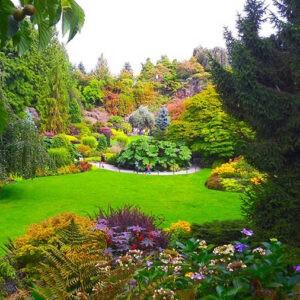 Топ 10 лучших островов для отдыха-Ванкувер-уникальная флора парков