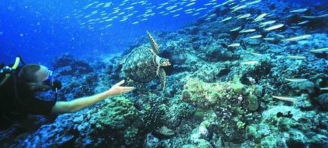 отдых на Сейшельских островах, остров Силуэт - прекрасные условия для дайвинга