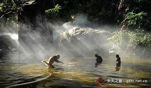 Отдых на острове Хайнань, заповедник макак